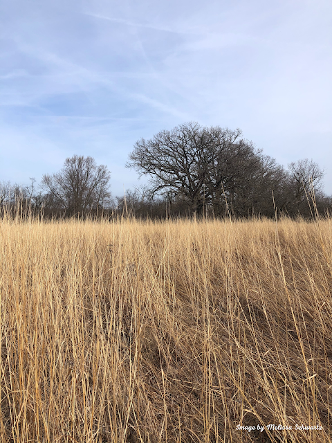 Grasses of the pasture yielding to a wooded grove at Brunner Family Forest Preserve.