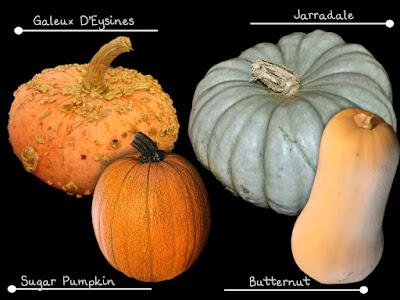 Some squash varieties