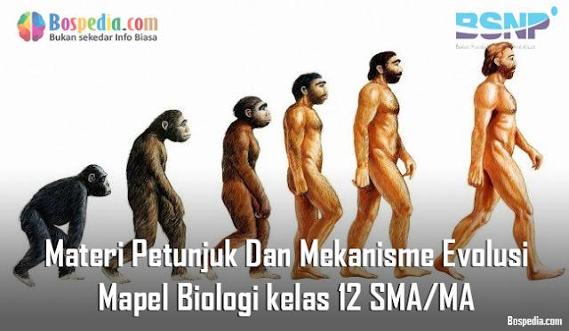 Materi Petunjuk Dan Mekanisme Evolusi Mapel Biologi kelas 12 SMA/MA