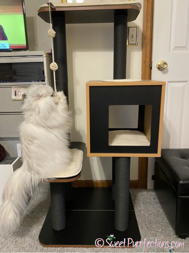 Silver shaded Persian Cat, Brulee, plays with the rope on the Catit Vesper High Base Cat Tree