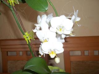http://misiowyzakatek.blogspot.com/2015/06/pochwal-sie-storczyki.html