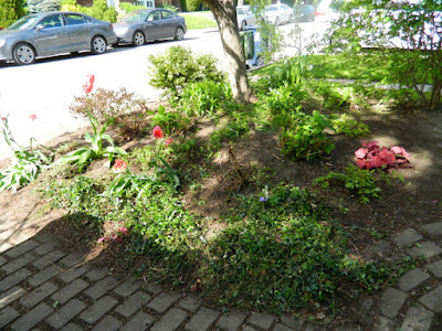 Wychwood Front Yard Spring Cleanup Toronto After by Paul Jung Gardening Services--a Toronto Organic Gardener