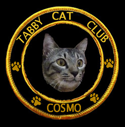 Tabby Cat Club