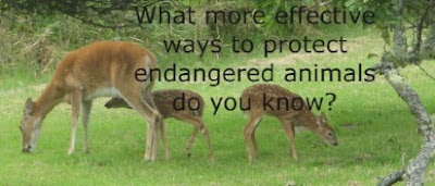 ways to protect endangered animals