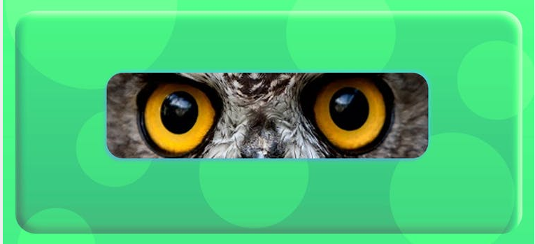 Guess the Animal by Its Eyes Quiz Answers 100% Score