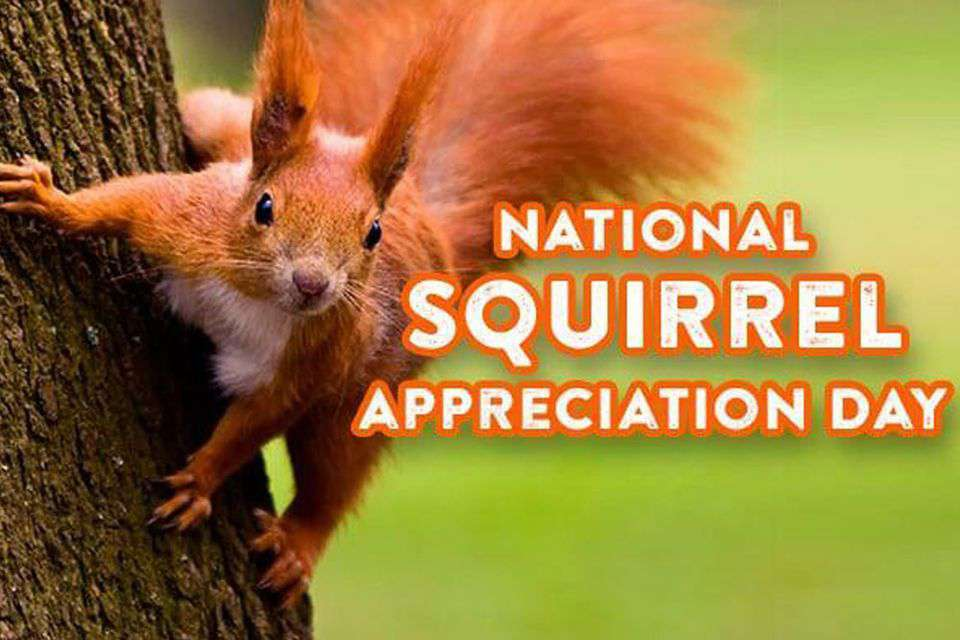 National Squirrel Appreciation Day Wishes for Instagram