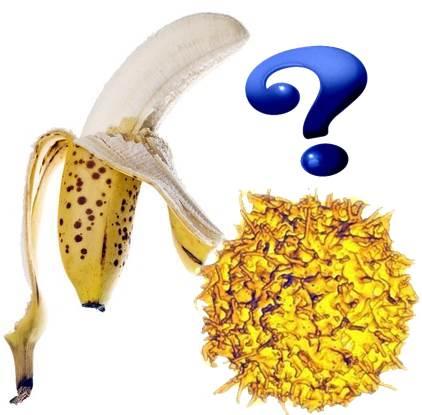 Las bananas nutren pero no curan el cáncer porque no poseen TNF