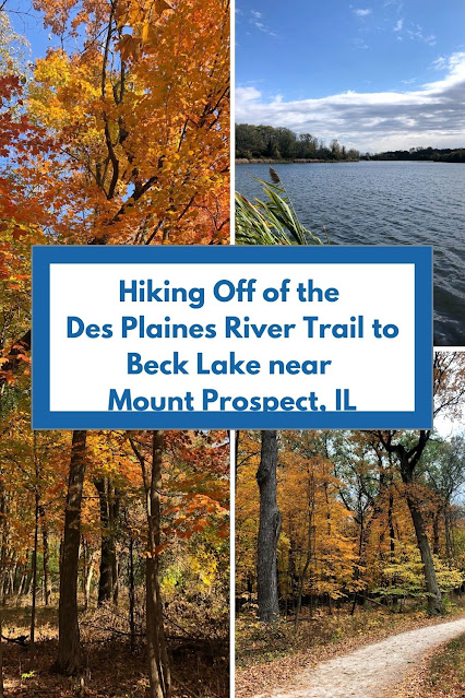 Hiking Off of the Des Plaines River Trail to Beck Lake Enjoying Fantastic Birding Near Mount Prospect, IL
