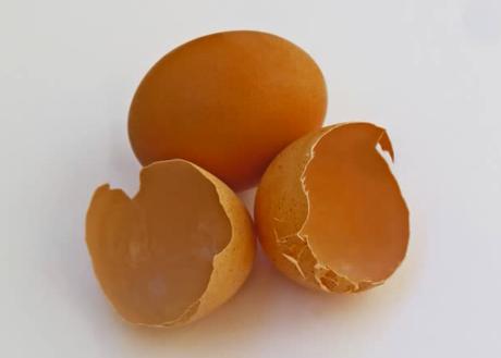 Nandur Nandur Cara Terbaik Memanfaatkan Kulit Telur Untuk Tanaman