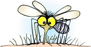 Penyebab Kulit Gatal Setelah Digigit Nyamuk