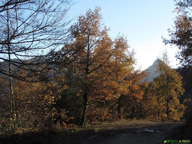 Bosque camino a la Collada Llomena