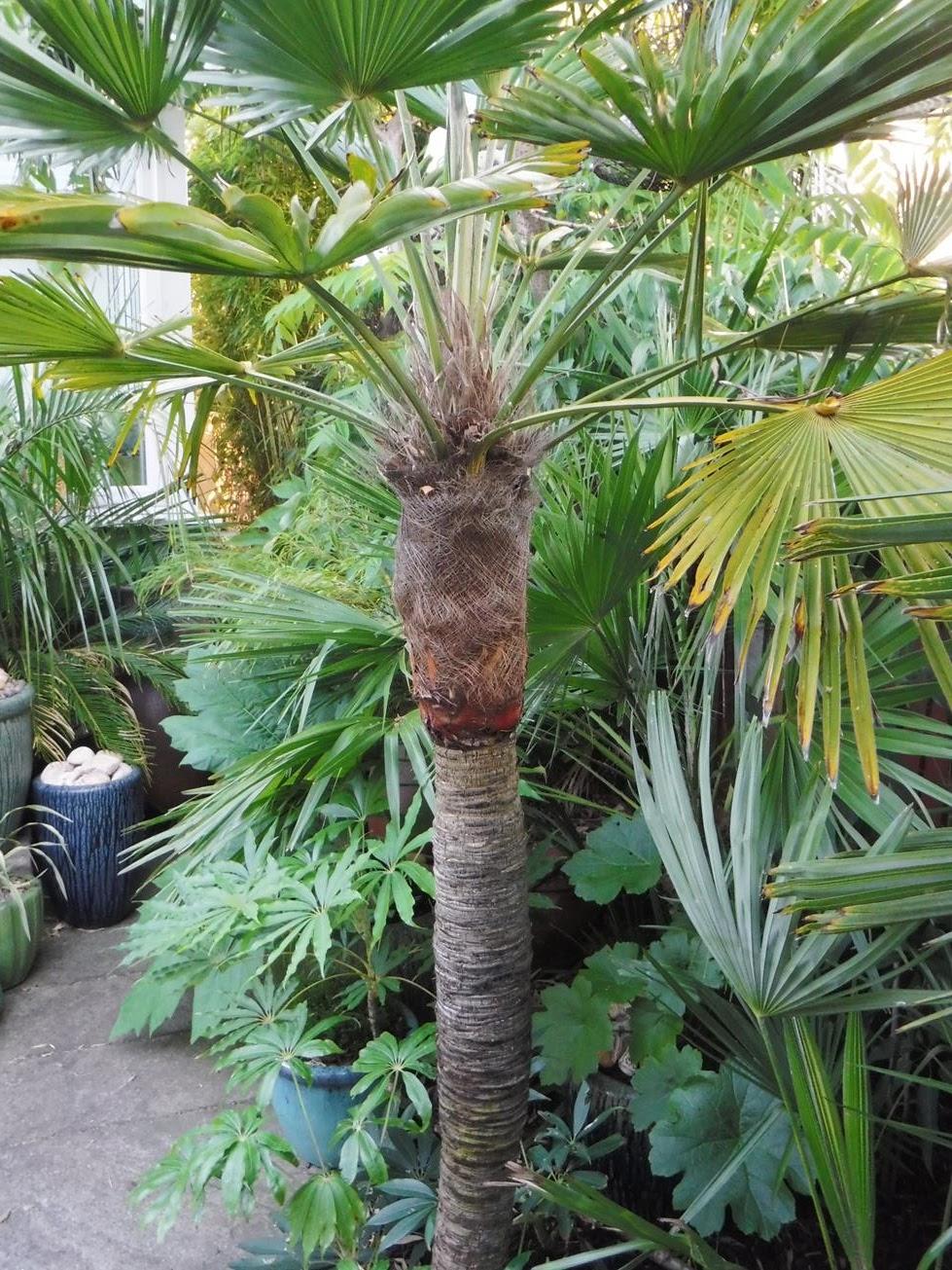 Alternative Eden Exotic Garden A Different Style Of Stripping