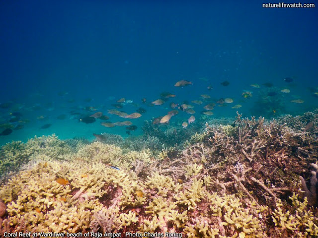 There is abundant fish in Raja Ampat islands