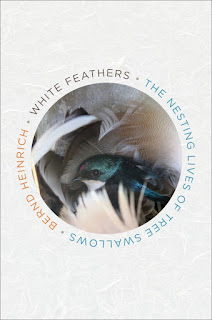 review of White Feathers: The Nesting Lives of Tree Swallows by Bernd Heinrich