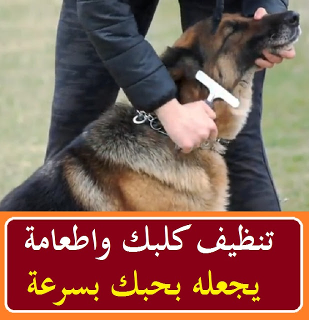 """""""كيف تجعل الكلاب تحبك"""" """"كيف اجعل كلبي يحبني"""" """"كيف تجعل الكلاب تطيعك"""" """"كيف اخلي كلبي يحبني"""" """"ازاي اخلي كلبي يحبني"""" """"كيف تجعل الكلاب تخاف منك"""" """"كيف تجعل الكلاب شرسه"""" """"كيف اجعل كلبي شرس"""" """"كيف اجعل كلبي شرسا"""" """"كيف اخلي كلبي شرس"""" """"ازاي اخلي كلبي شرس"""""""
