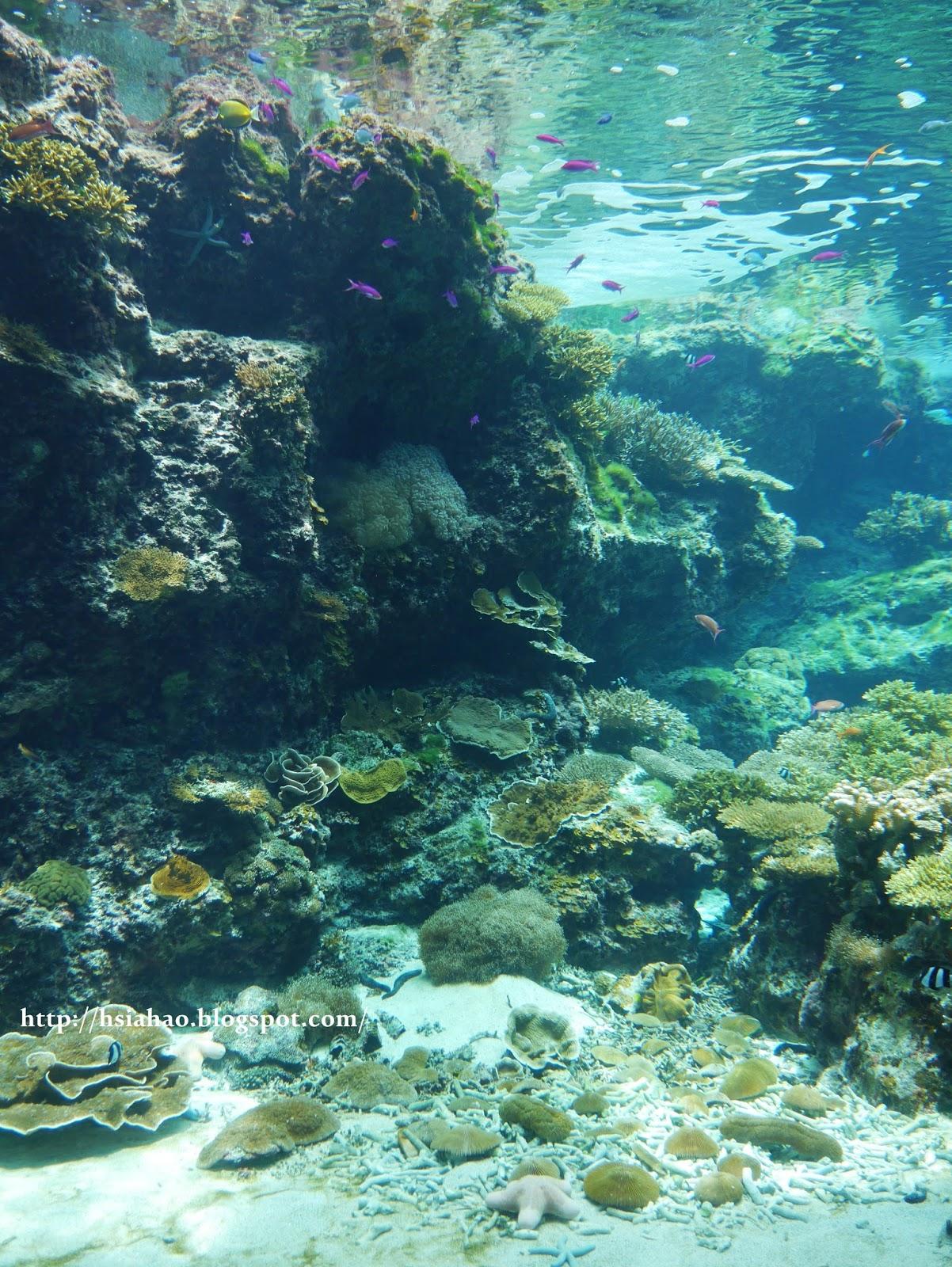 沖繩-海洋博公園-美麗海水族館-魚-景點-自由行-旅遊-旅行-okinawa-ocean-expo-park-Churaumi