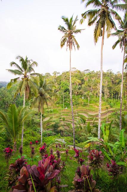 Risaie di Tegalagang-Bali