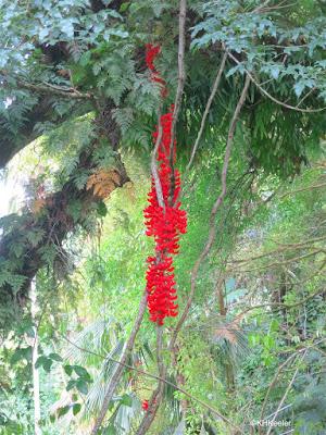 Wahiawa Botanical Garden, Oahu, Hawaii