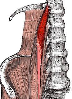 Anatomi Otot Psoas Major: Origo, Insersio, Persarafan, Dan Fungsi