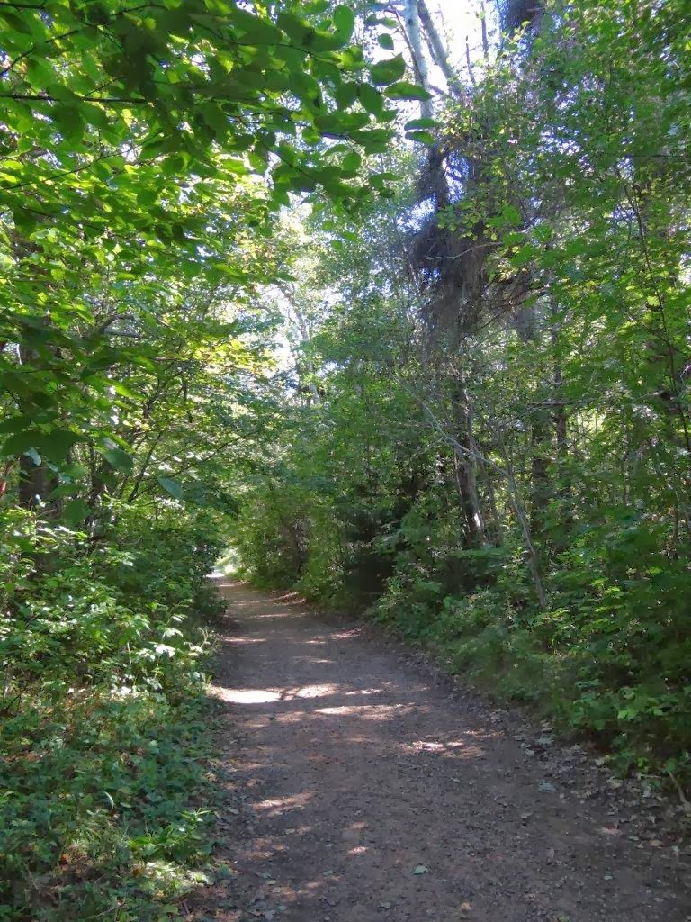 Destination Green Gables Haunted Wood And Lover S Lane