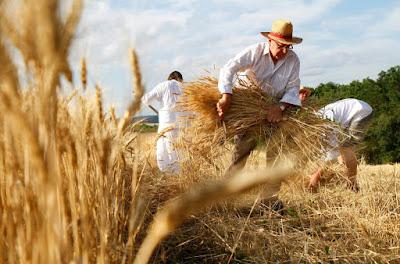 Ahogy az aratók, aratás, Kányádi Sándor, vers, vers-szombat,