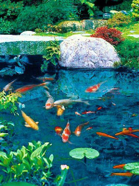 Pirana aquarium come progettare e realizzare un laghetto for Carpe koi aquarium