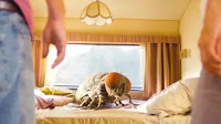 Giant Fly on a bed in a motorhome