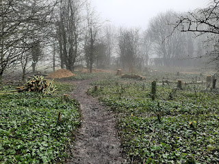 The woodland after cutting the ash