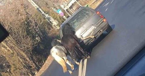 Az autó után kötve futtatta a pónilovakat a gazdájuk Kaposváron