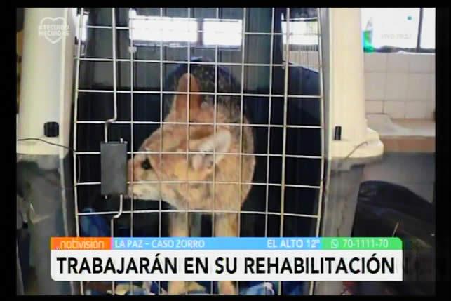 Zorro Antonio no volverá jamás con su familia humana; dicen que es una víctima del tráfico