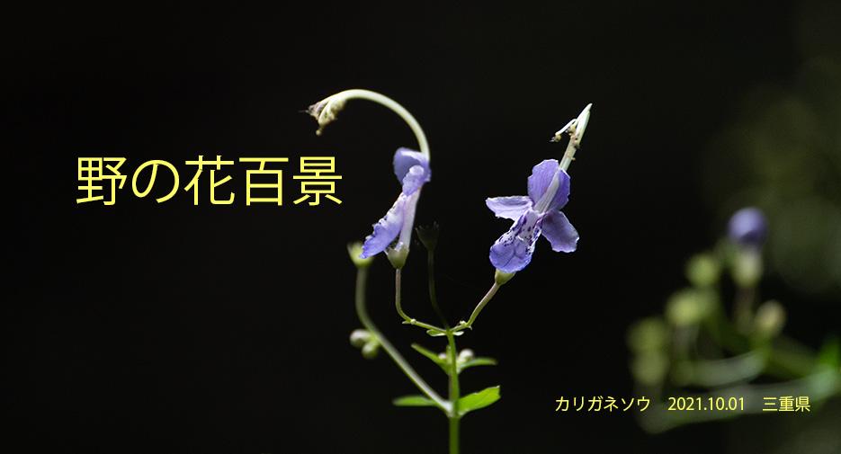 野の花百景