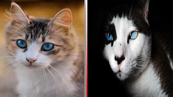 غرائب وعجائب القطط