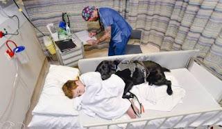 Perro con su dueño enfermo
