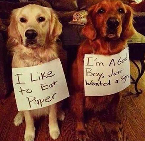 Funny Dog Just Wanted A Sign Joke Picture