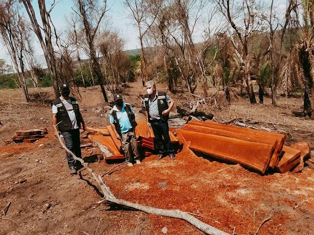 Operação flagra desmatamento ilegal em Senador Canedo