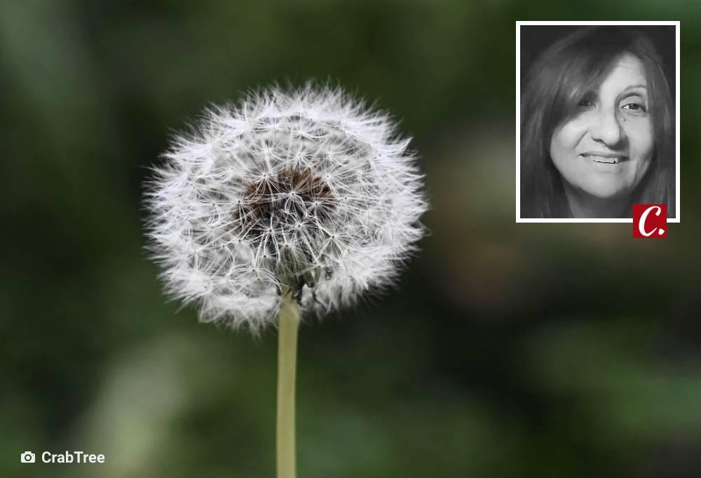 literatura conto otimismo auto ajuda semente alegria