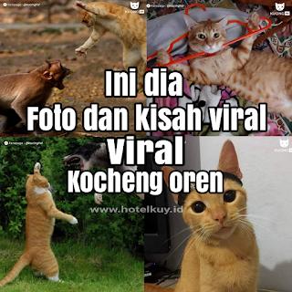 kisal viral kucing oren dan foto kucing oren