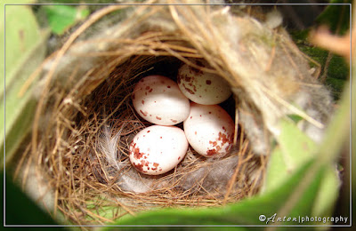 Bird photography | Nest