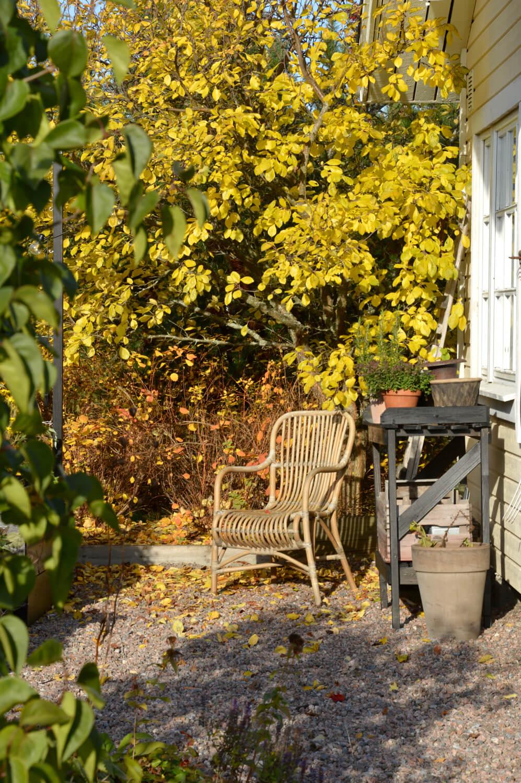syksy-puutarhassa-korituoli-luumu