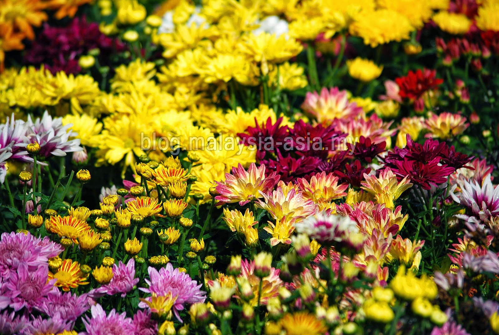 Flower and Garden Festival Penang