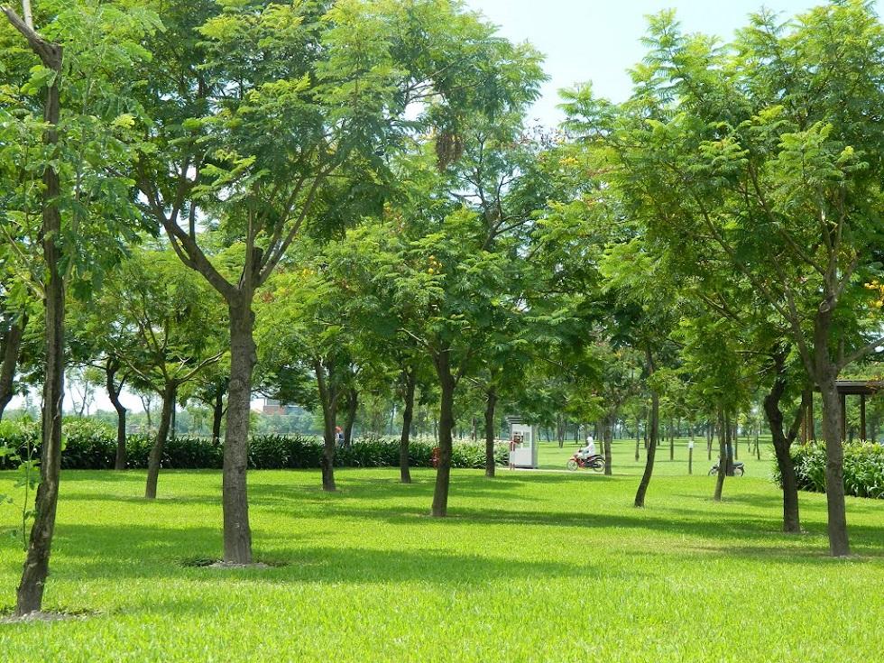 Công viên Yên Sở một không gian hiếm hoi trong lòng Thủ Đô ồn ào chật chội