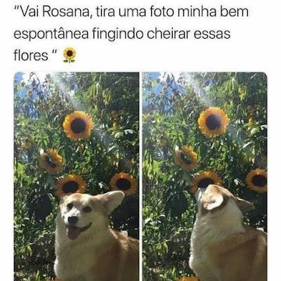 memes cachorro