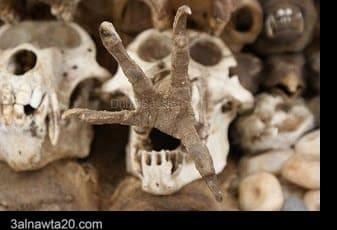 """مقالات -سوق العظام -اكبر سوق تجاري خاص ب السحر والشعوذة بالعالم"""""""