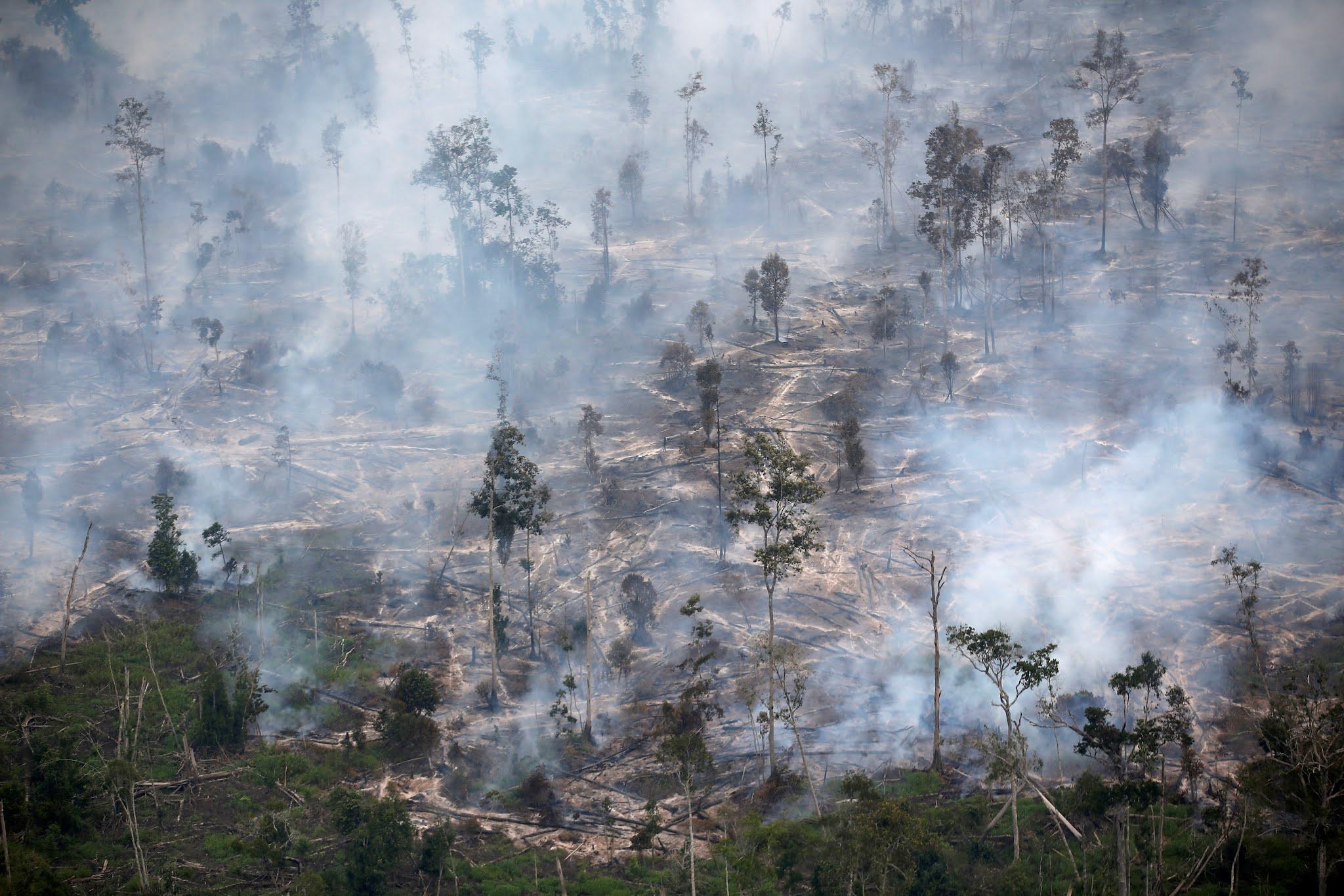Dukung Emisi Nol Karbon, Indonesia Justru Akhiri Kerjasama Dengan Norwegia