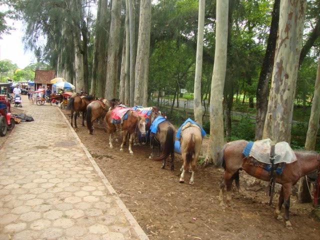 Parque dos Cavalos