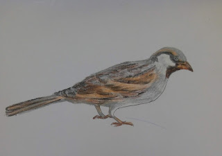 Drawing image of a sparrow