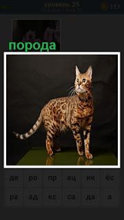 пятнистая порода кошки стоит на столе