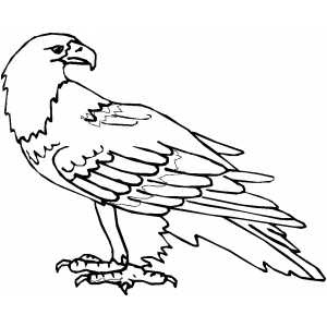 bird and coloring pages and eagle | Eagle Bird Coloring Pages To Printable