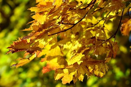 Folhas caindo no outono. #PraCegoVer
