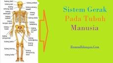 Penjelasan Sistem Gerak Pada Manusia dan Komponen nya